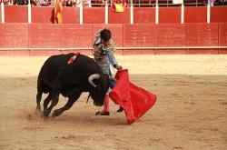 Cuatro festejos taurinos en San Roque 2016 Sigüenza
