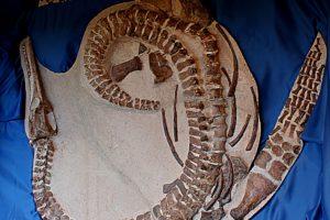 Plesosaurio