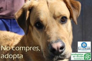 Campaña adopta perros 2014