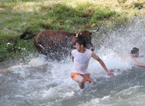 Vacas tajo. 2008 (2)