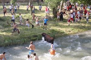 Vacas tajo. 2008
