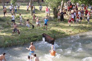 vacas por el rio tajo