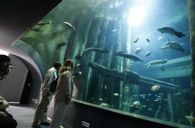 Inmersión en el acuario fluvial mas grande de Europa. Fin de semana de 4*