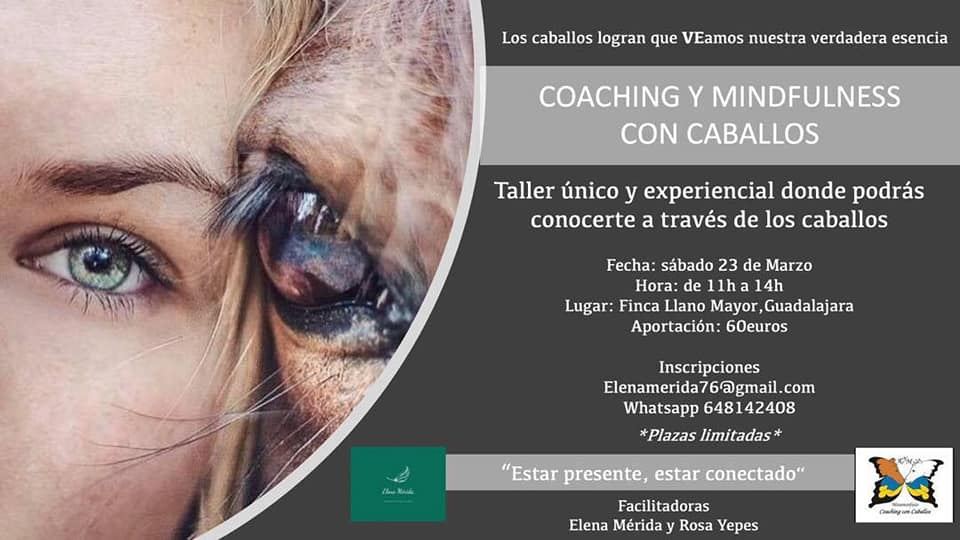 Coaching y Mindfullness con Caballos