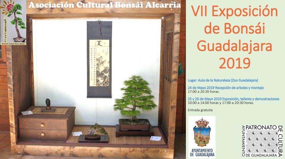 VII EXPOSICIÓN DE BONSÁI
